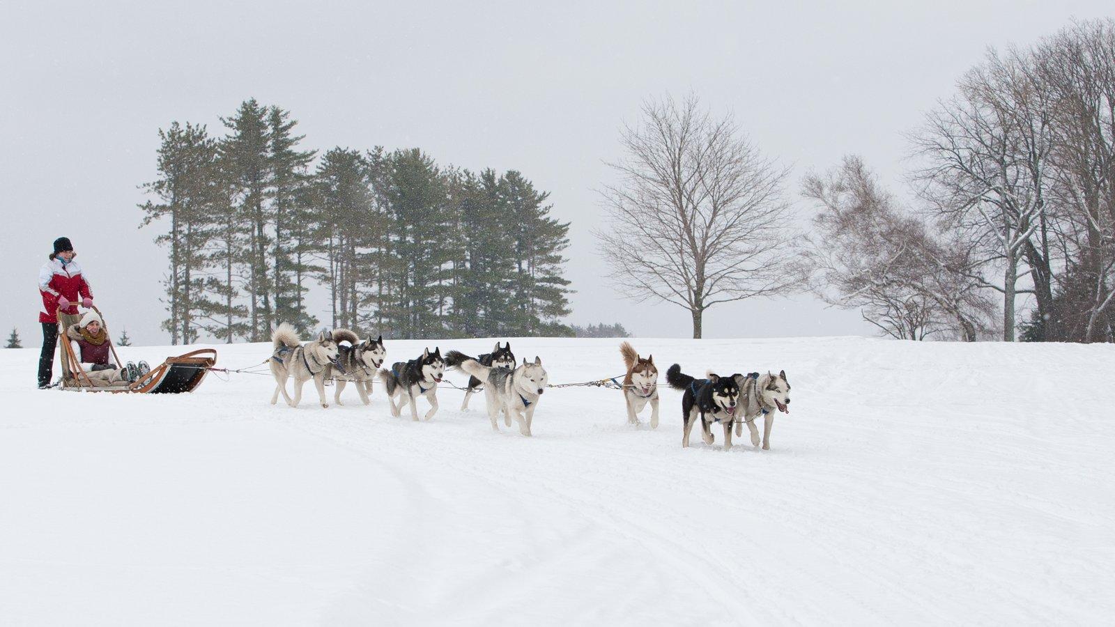 Poconos mostrando neve, animais fofos ou amigáveis e trenó com cães