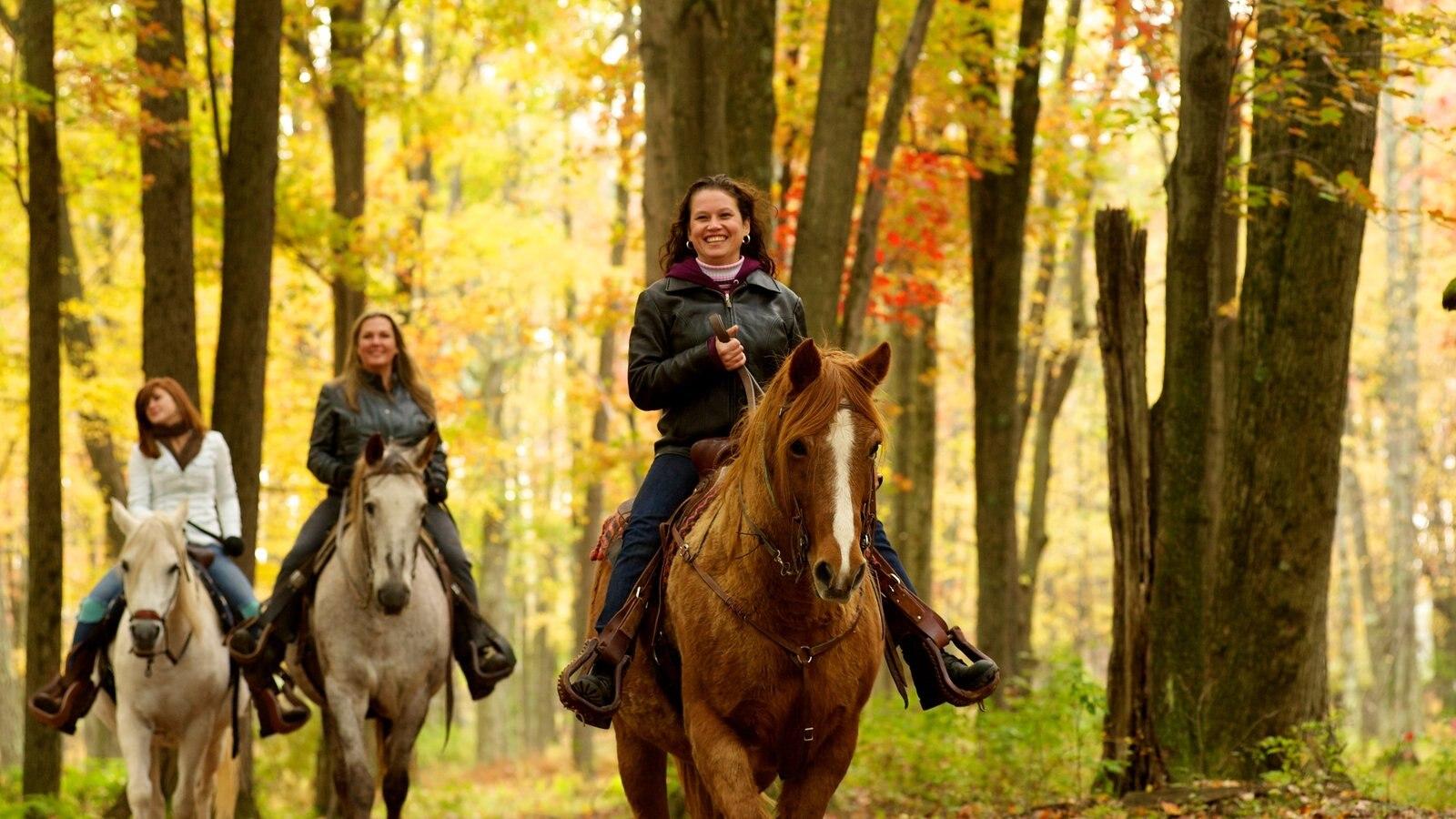 Poconos que inclui animais terrestres, cavalgada e cores do outono