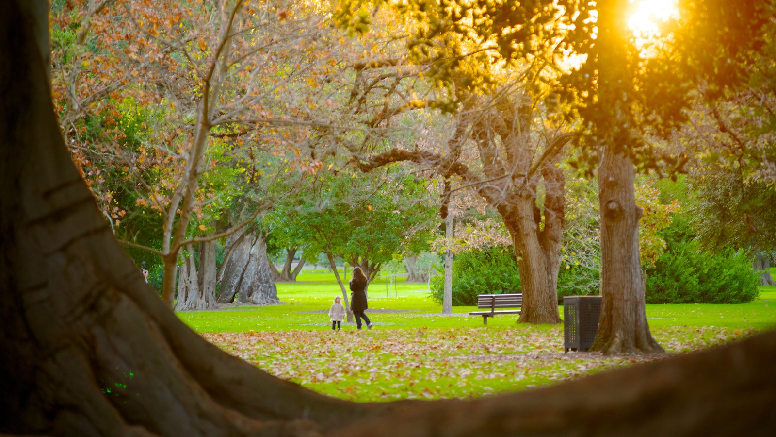 Adelaide Botanic Gardens showing a sunset, a garden and fall colors