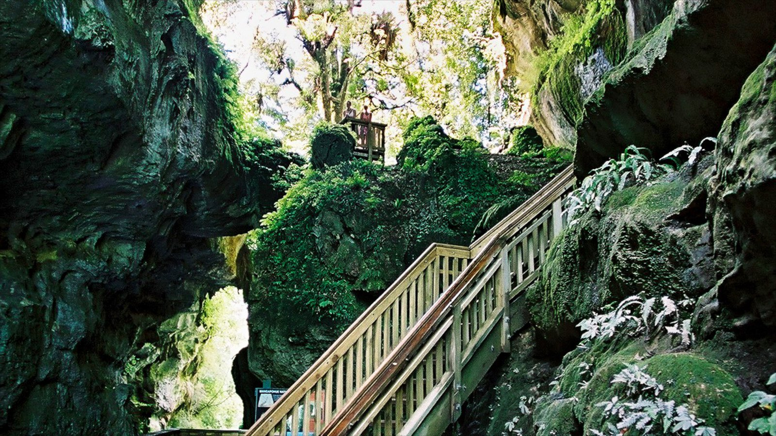 Waitomo Caves featuring caves