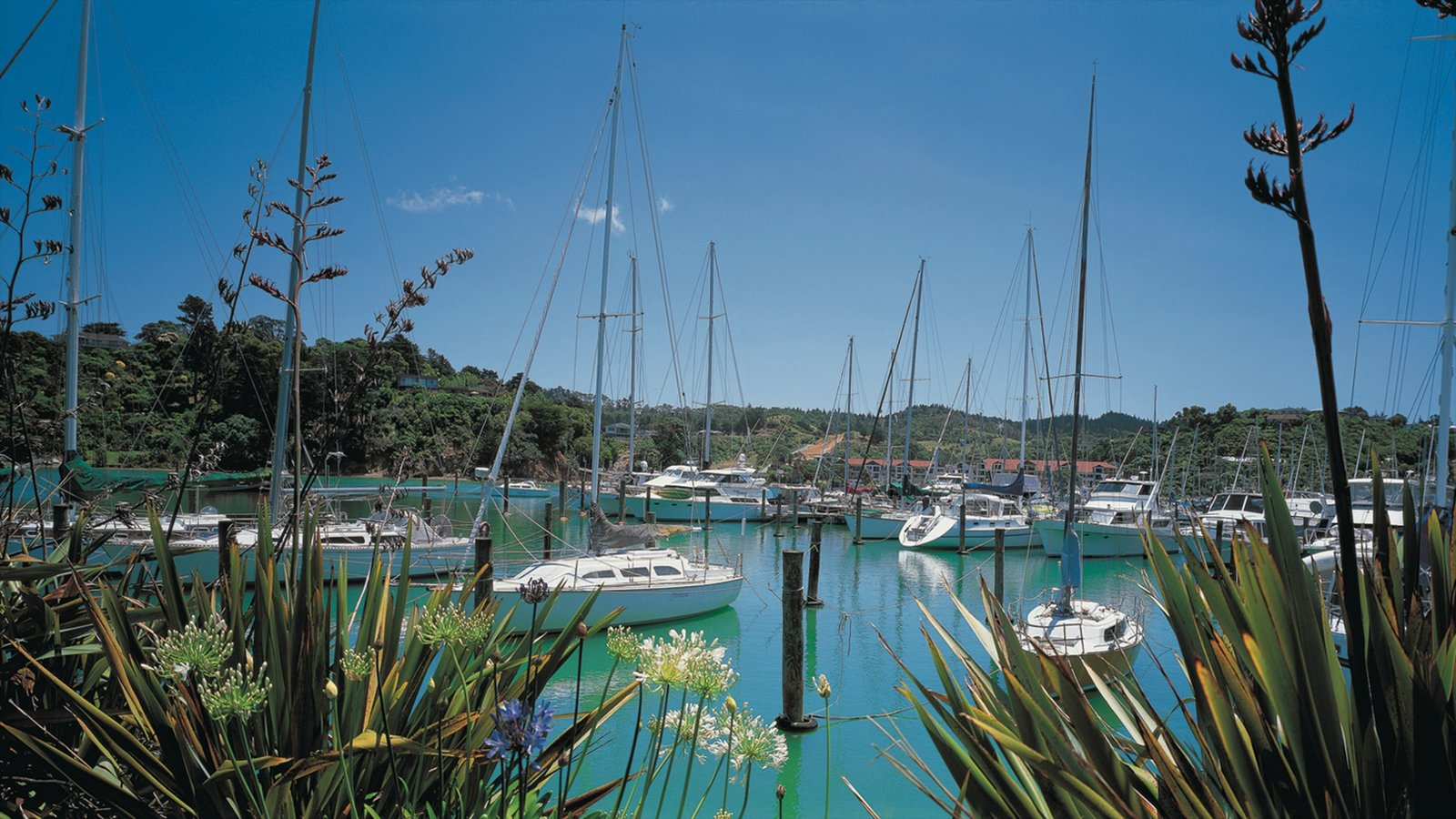 Whangarei featuring boating, sailing and a marina