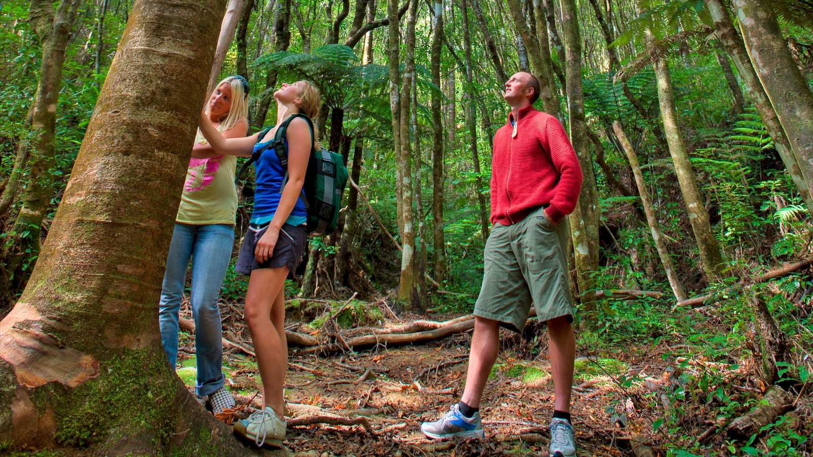 Coromandel which includes forest scenes, rainforest and hiking or walking