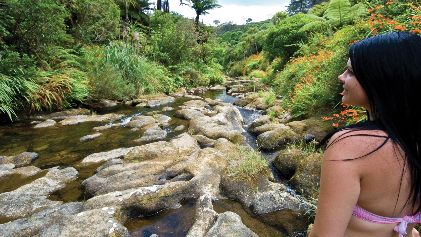 Coromandel showing wild flowers, forests and a river or creek