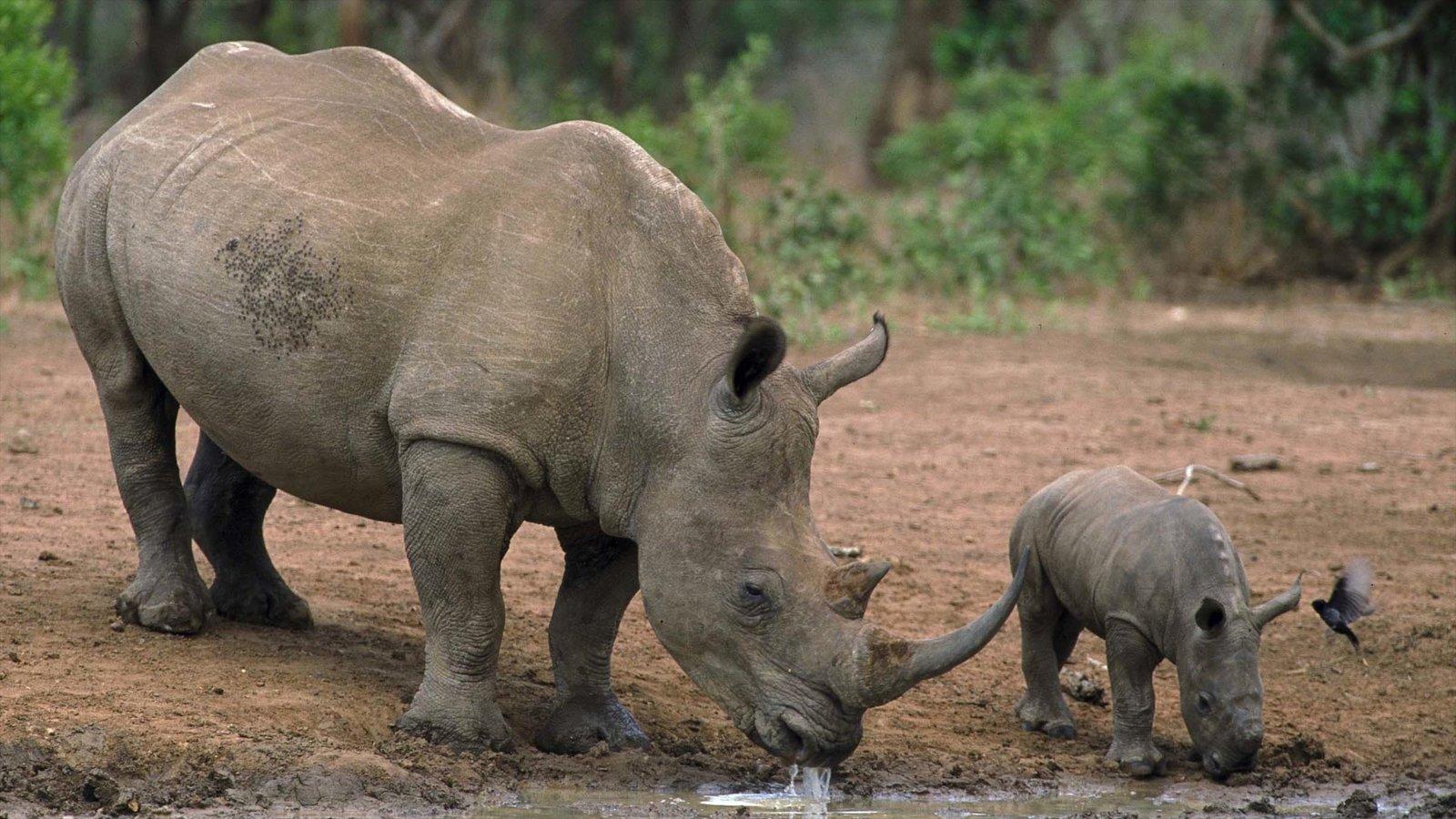 Hluhluwe showing land animals and zoo animals