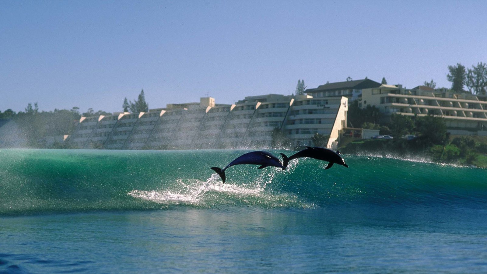 Margate which includes marine life, general coastal views and surf