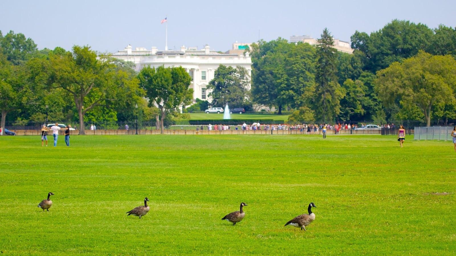 Casa Branca caracterizando um jardim, um edifício administrativo e vida das aves