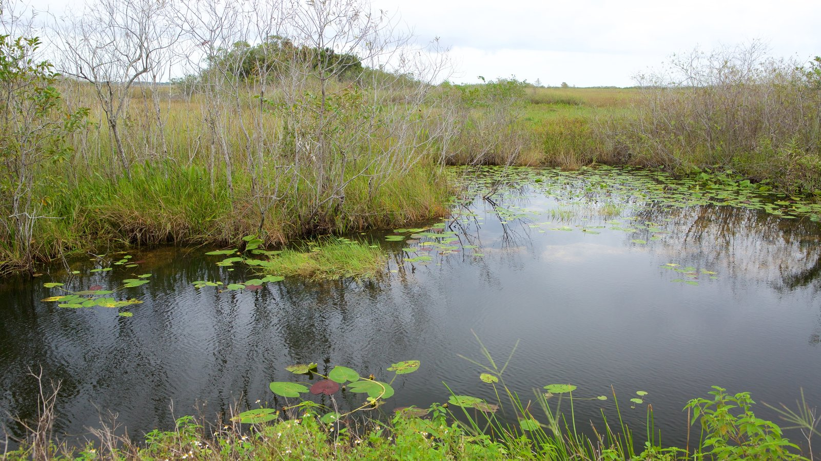 Anhinga Trail showing wetlands and a pond