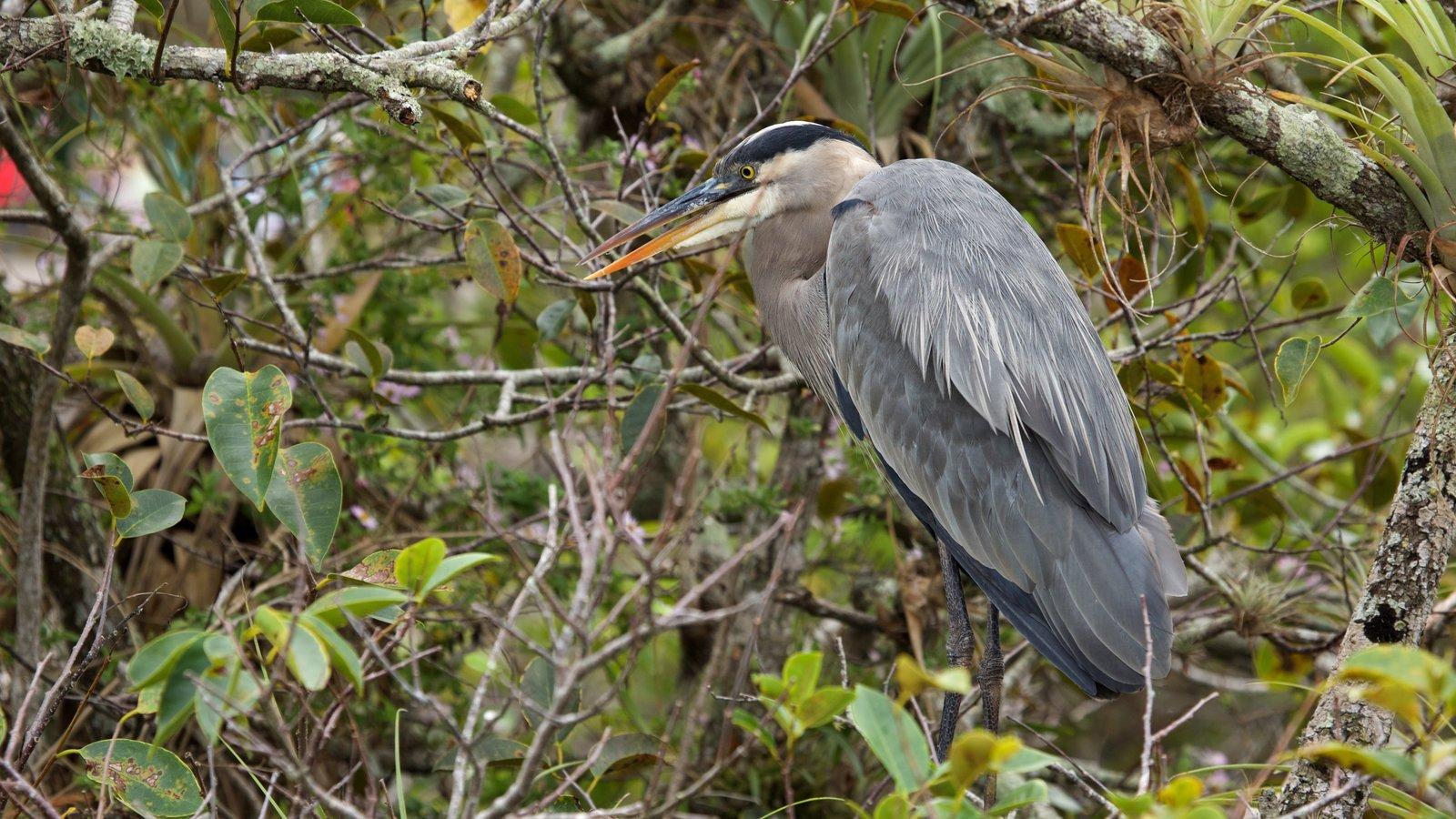 Anhinga Trail featuring bird life