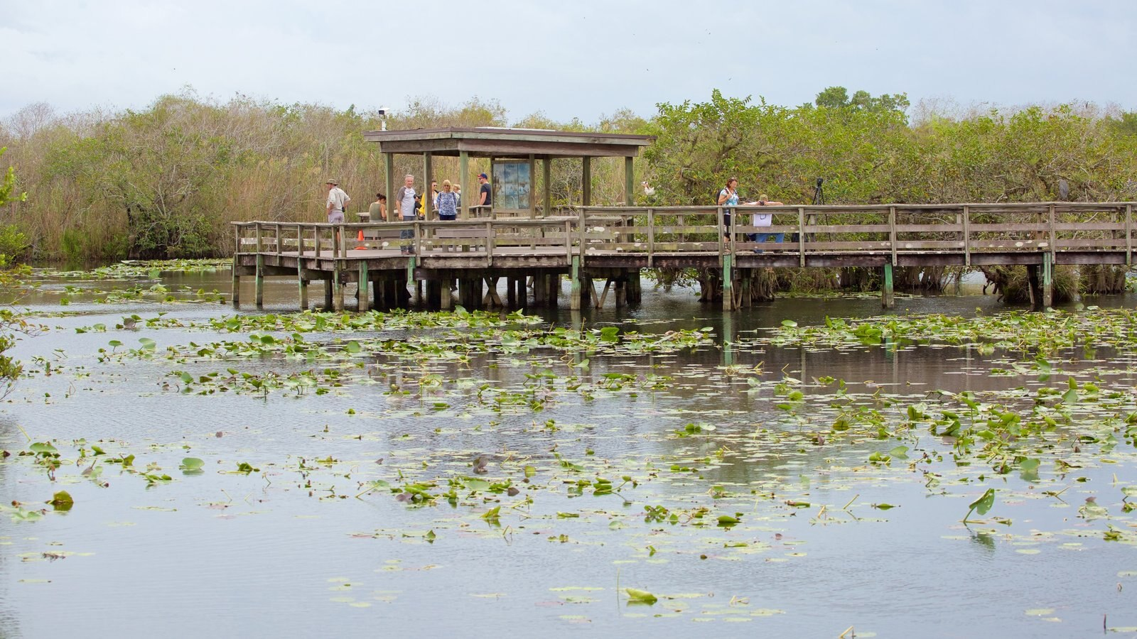 Anhinga Trail which includes a pond as well as a small group of people