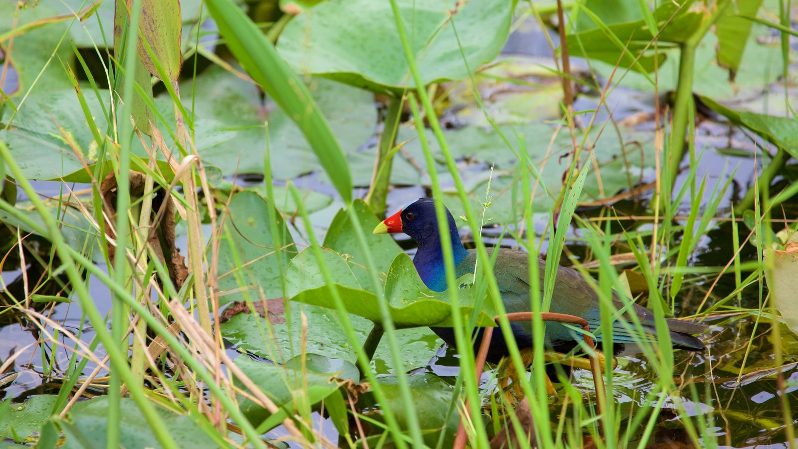 Anhinga Trail showing bird life and a pond