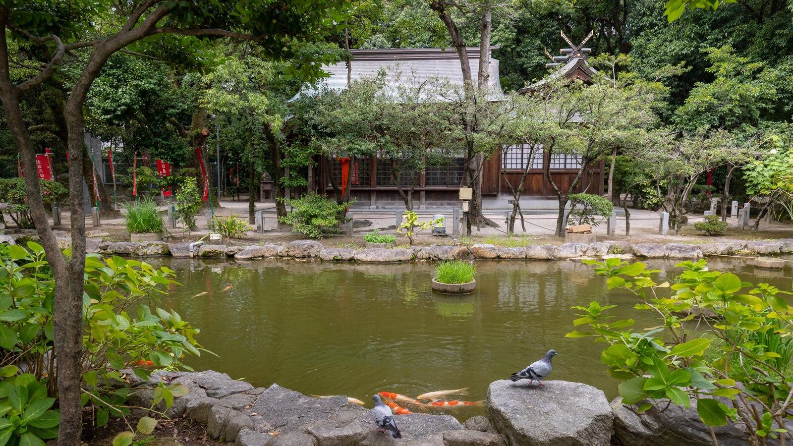 Hakata-ku showing a pond