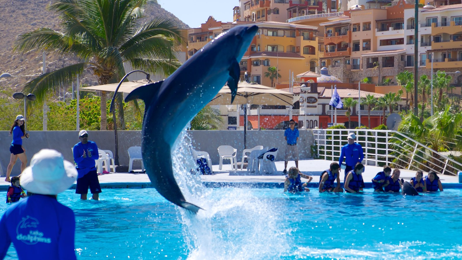 Cabo Dolphins showing marine life, performance art and whale watching