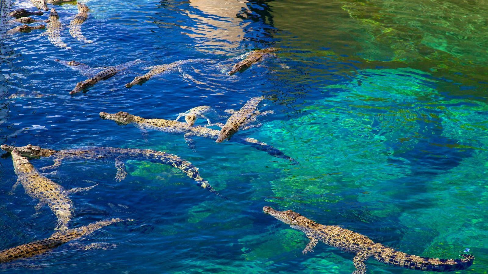 Crocosaurus Cove which includes dangerous animals and marine life
