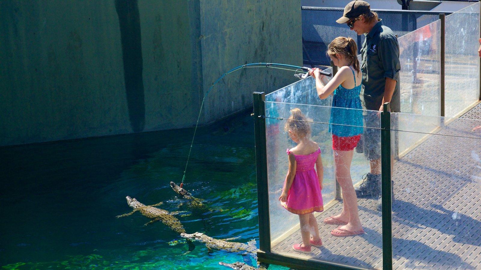 Crocosaurus Cove showing zoo animals, dangerous animals and fishing