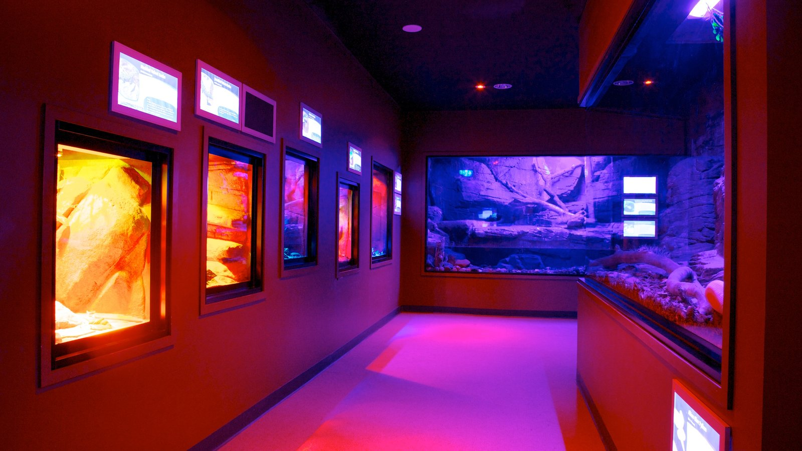Crocosaurus Cove featuring interior views and marine life