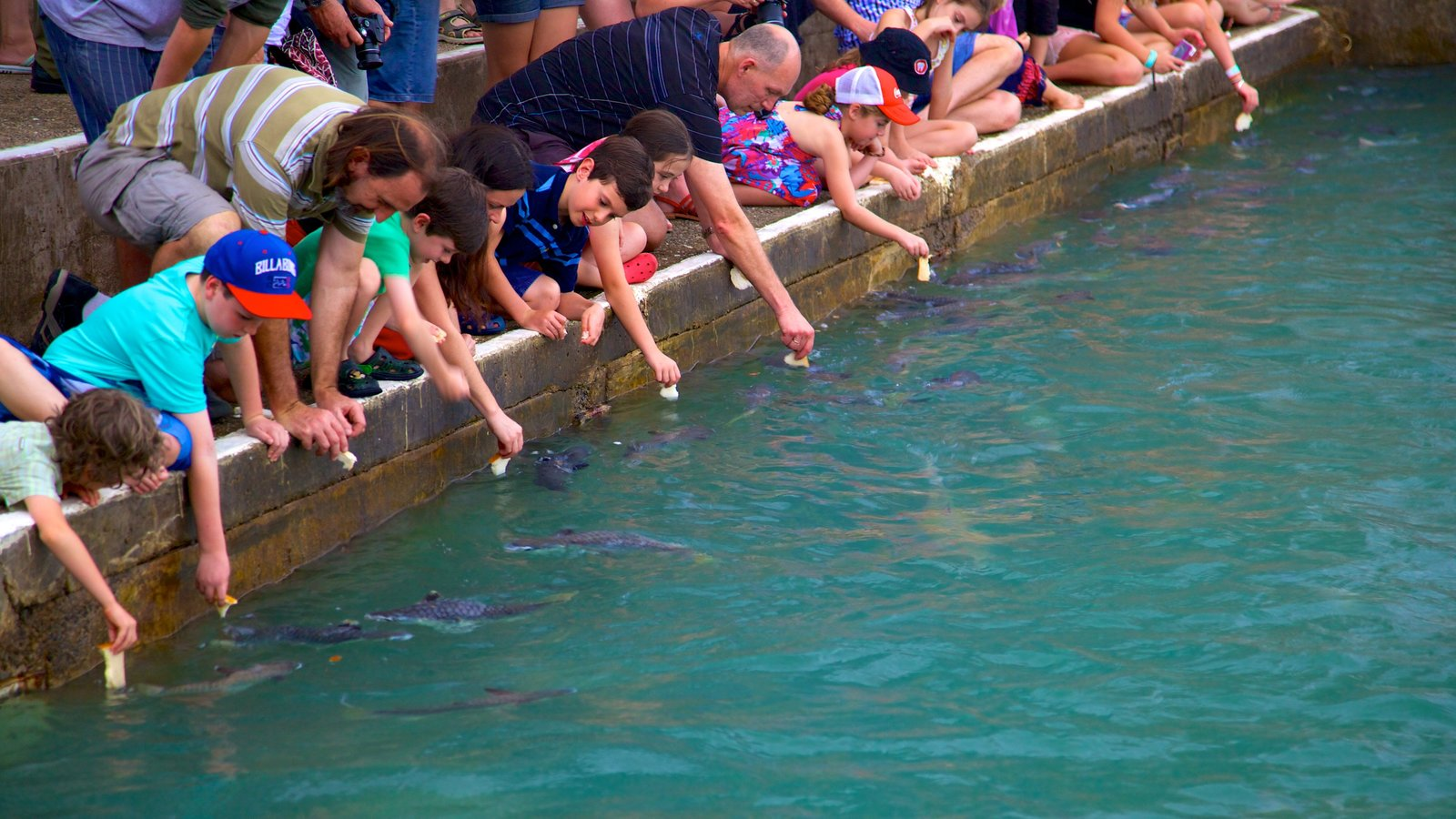 Aquascene which includes general coastal views and marine life as well as children