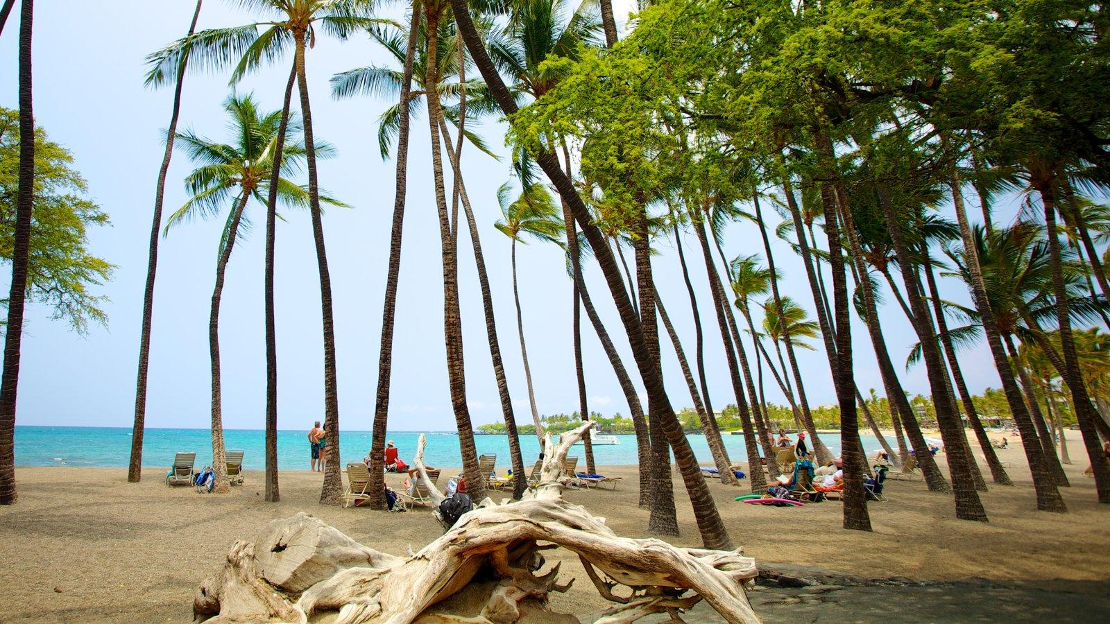 Hawai que incluye escenas tropicales y una playa de arena