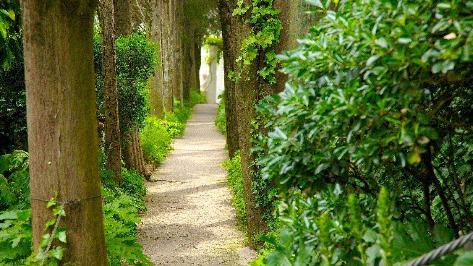Villa San Michele showing a park