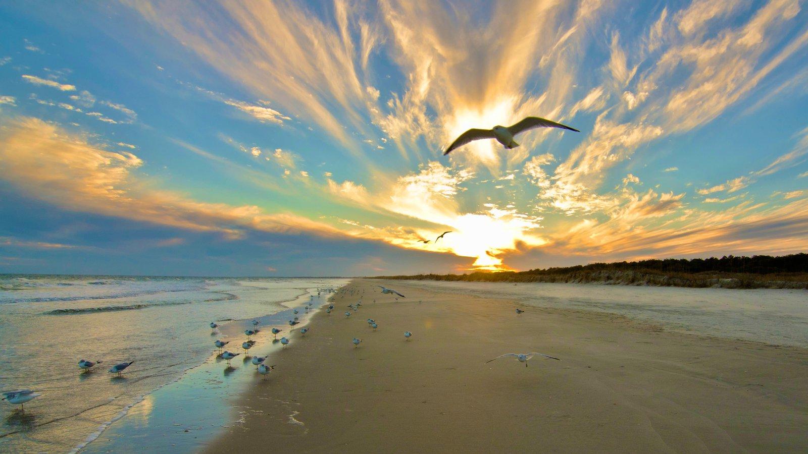 Huntington Beach State Park Featuring Landscape Views Bird Life And A Sandy
