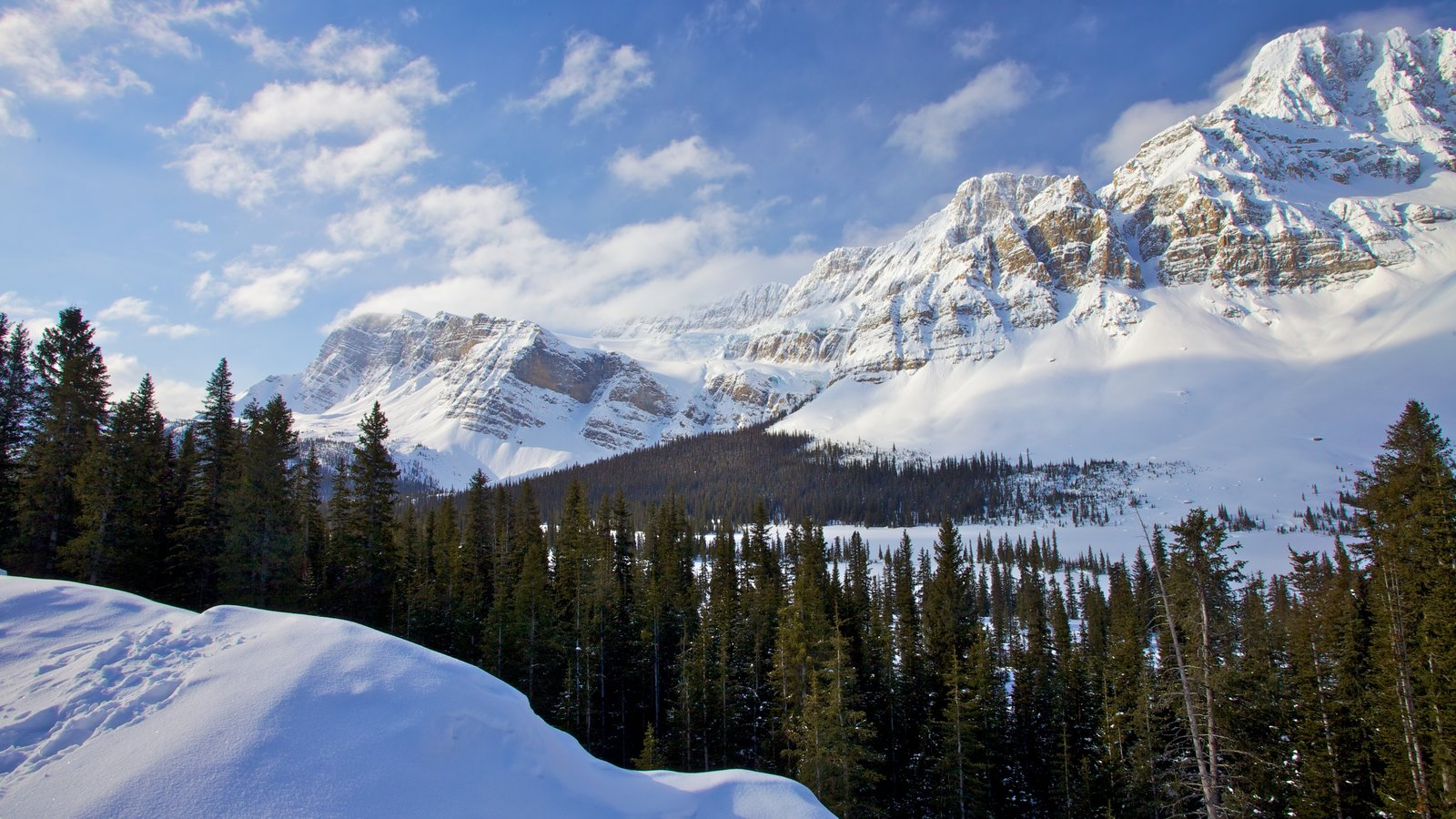 Icefields Parkway showing snow, landscape views and forests