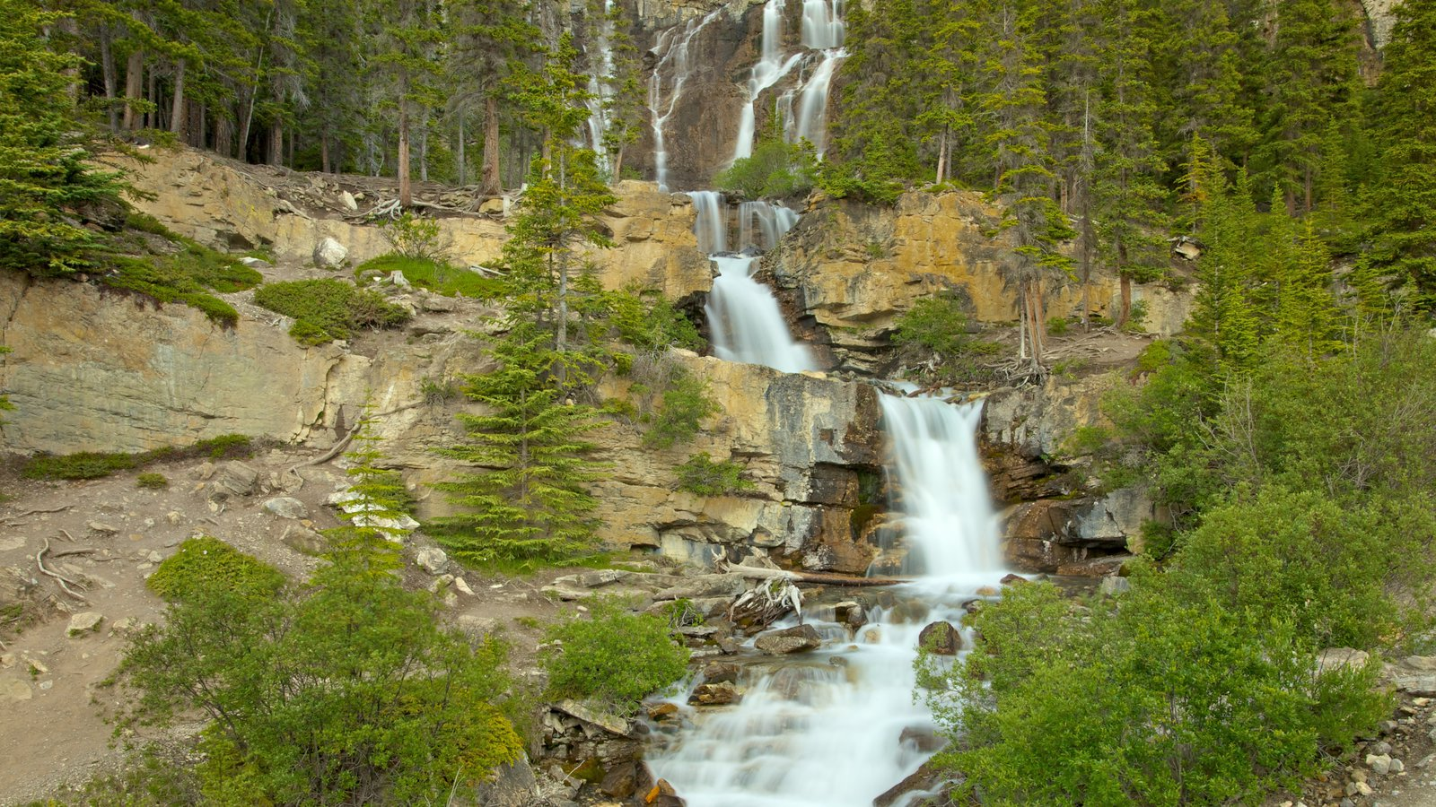 Tangle Falls showing landscape views, a cascade and forest scenes