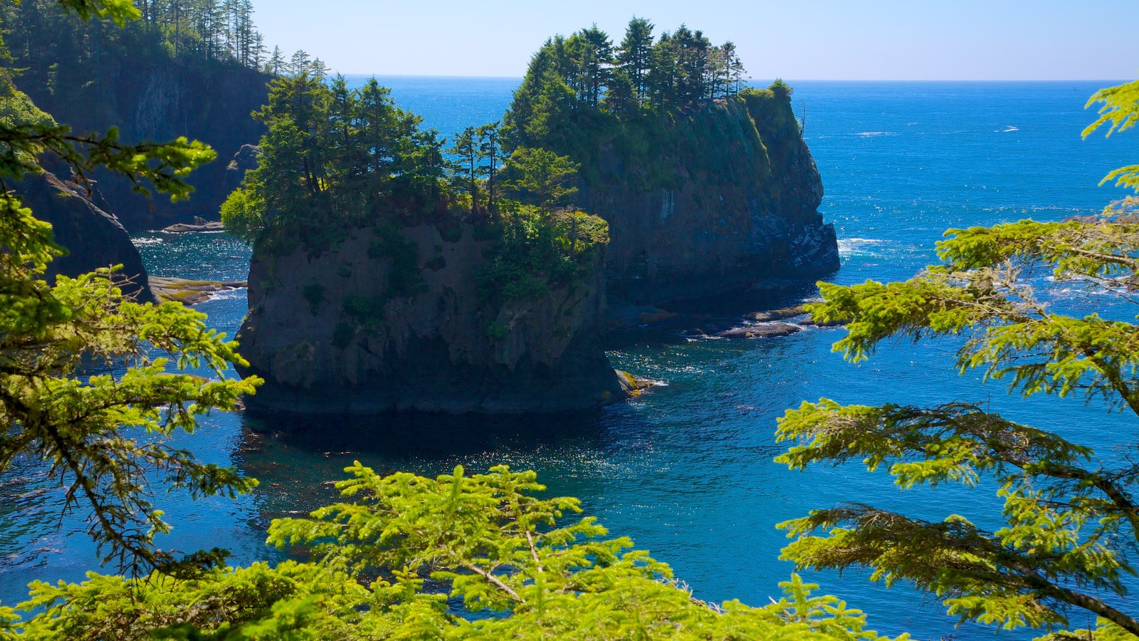 Cape Flattery featuring a bay or harbor, forest scenes and landscape views