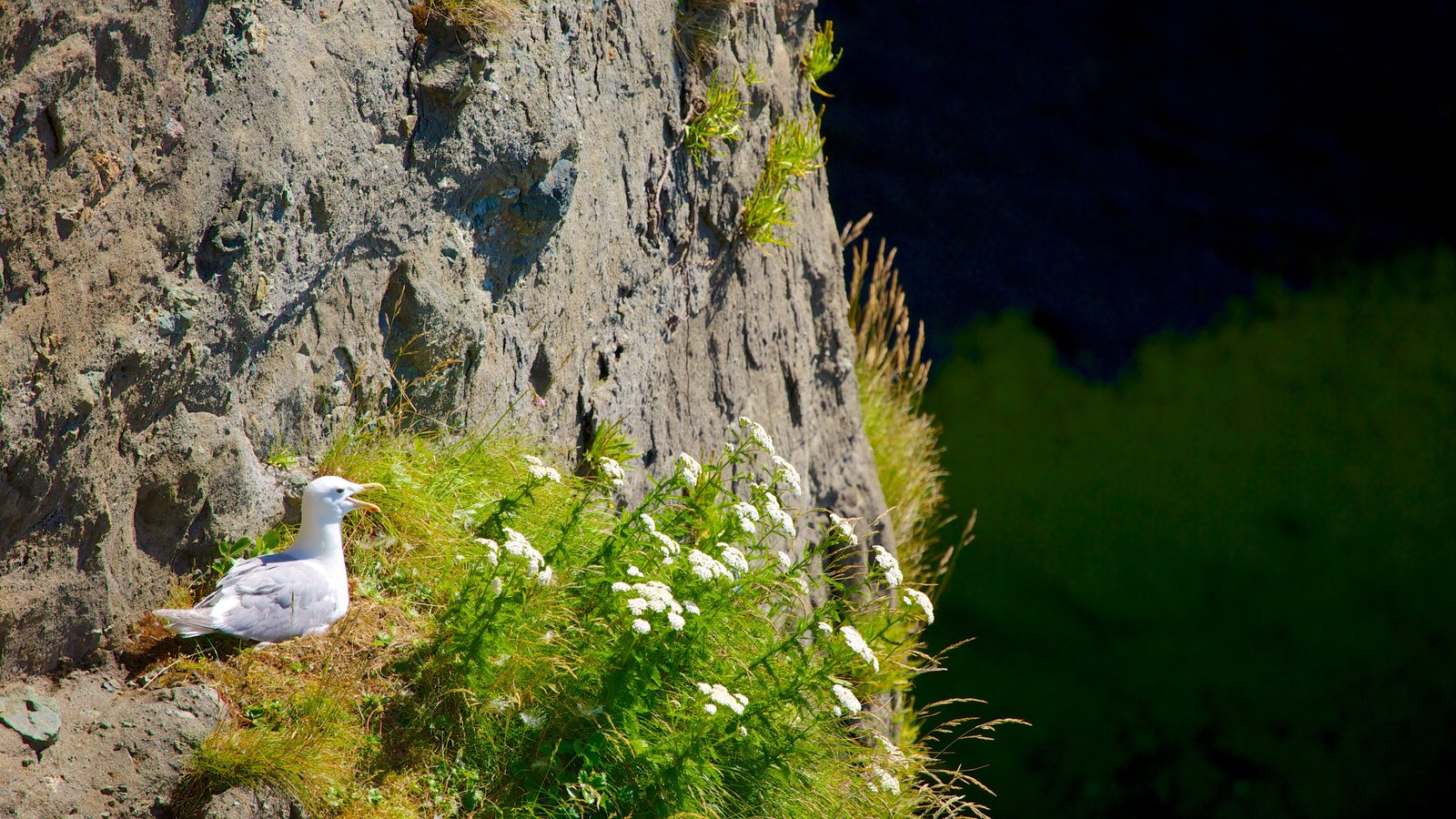 Cabo Flattery ofreciendo flores silvestres y vida de las aves