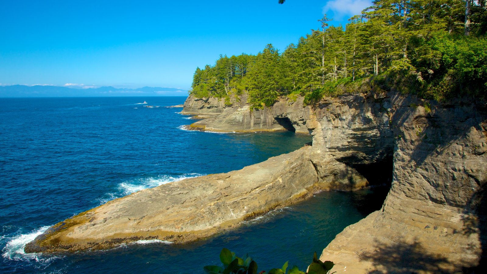 Cape Flattery featuring forests, landscape views and rocky coastline