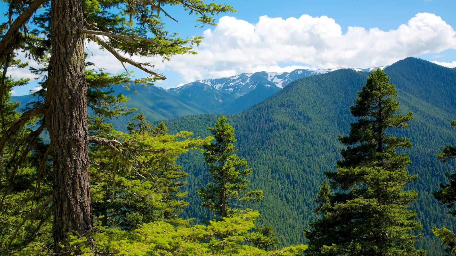 Hurricane Ridge Visitors Center mostrando paisagem e montanhas