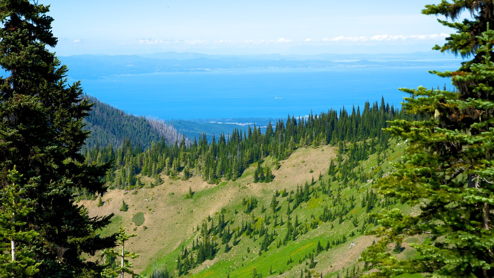Hurricane Ridge Visitors Center featuring tranquil scenes, forests and landscape views