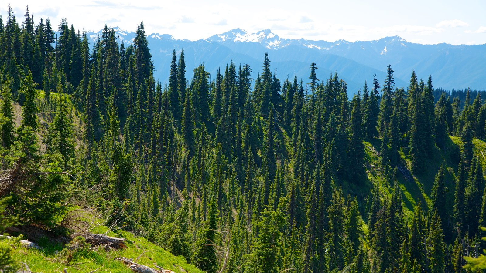 Hurricane Ridge Visitors Center which includes forest scenes, mountains and landscape views