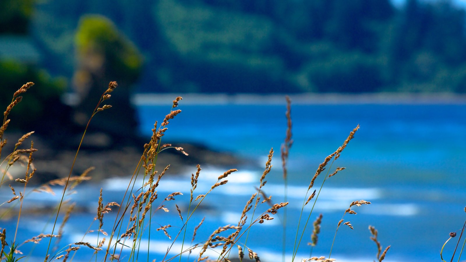 Olympic National Park caracterizando paisagens litorâneas