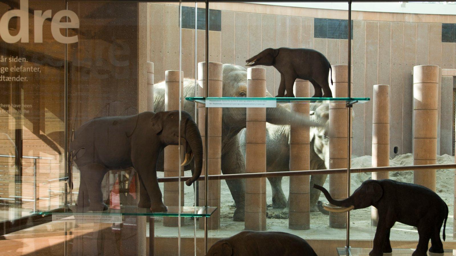 Copenhagen Zoo which includes land animals, zoo animals and interior views