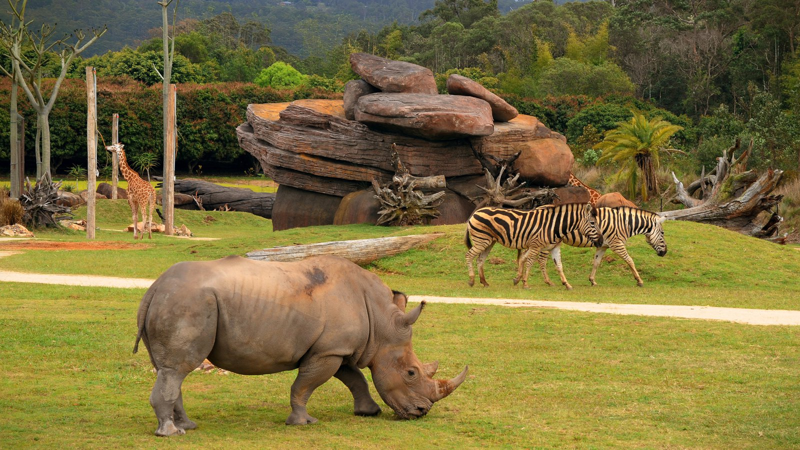 Australia Zoo showing land animals and zoo animals