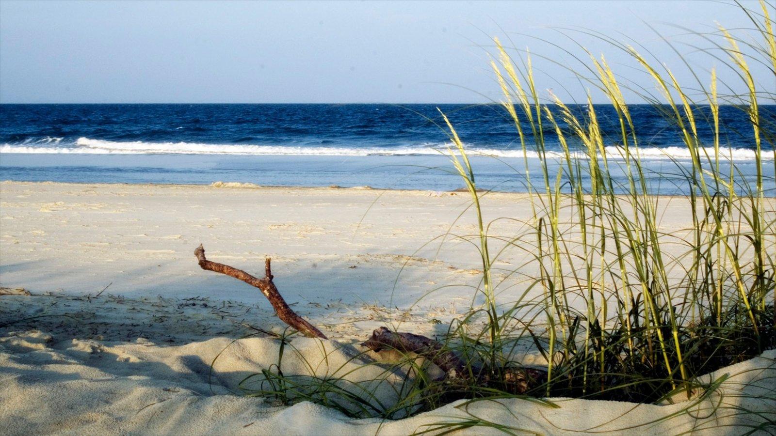 Savannah Which Includes A Sandy Beach