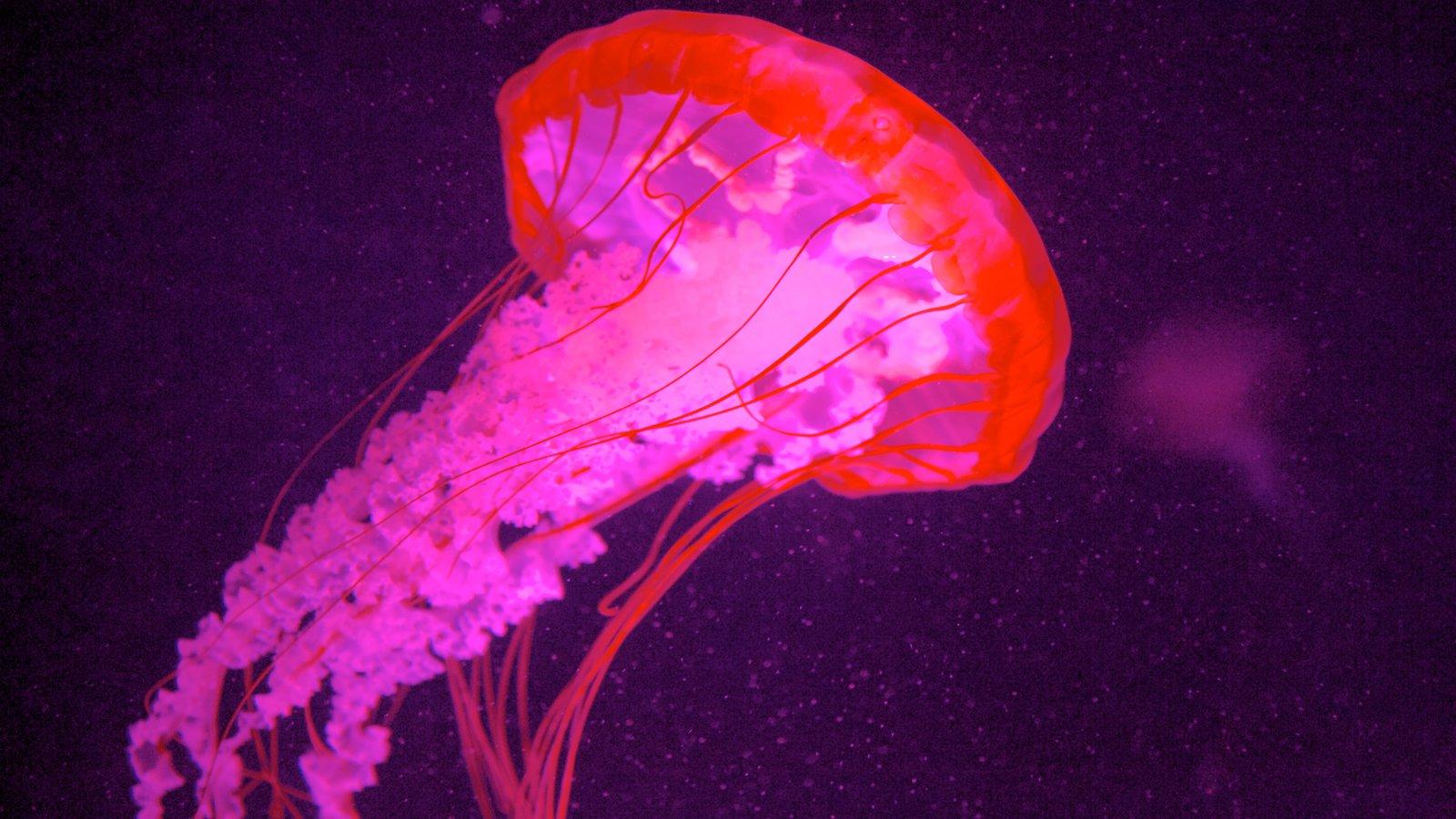 Quebec Aquarium Park featuring marine life