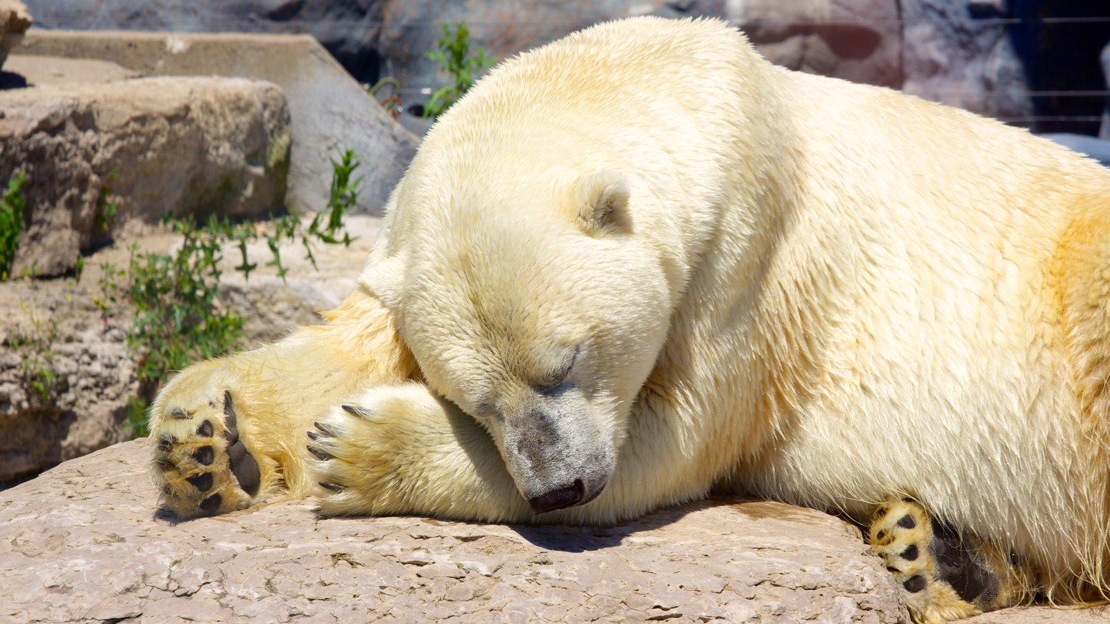 Toronto Zoo showing land animals, zoo animals and dangerous animals