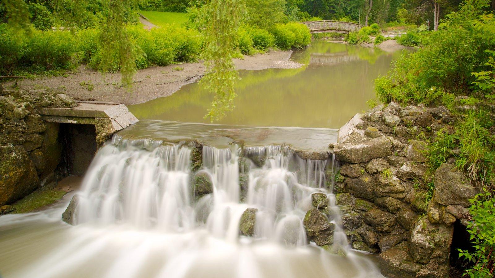 Edward Gardens mostrando um rio ou córrego, uma cachoeira e um parque