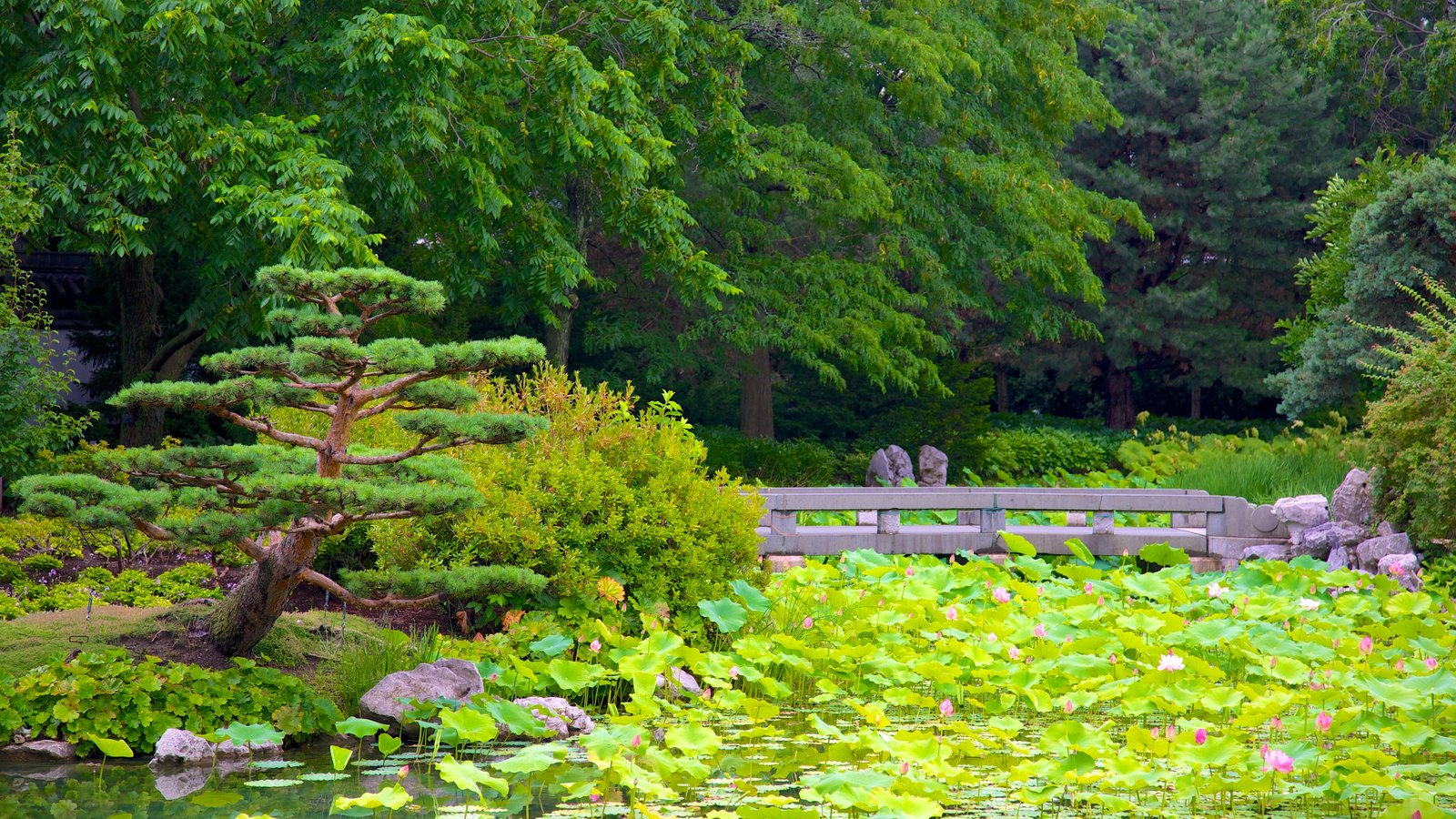 Montreal Botanical Garden Showing A Garden, A River Or Creek And A Bridge