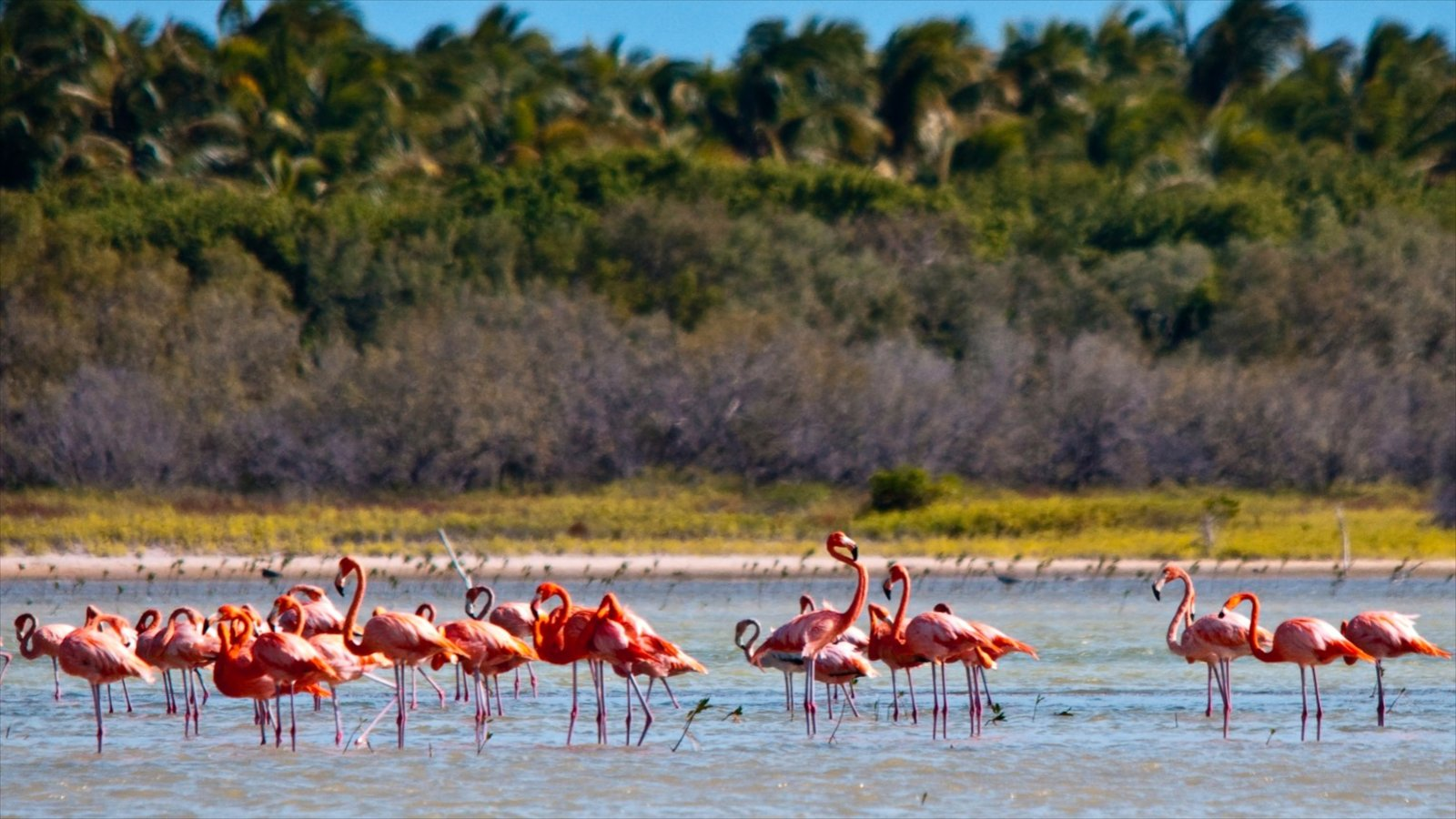 Barahona featuring bird life and general coastal views