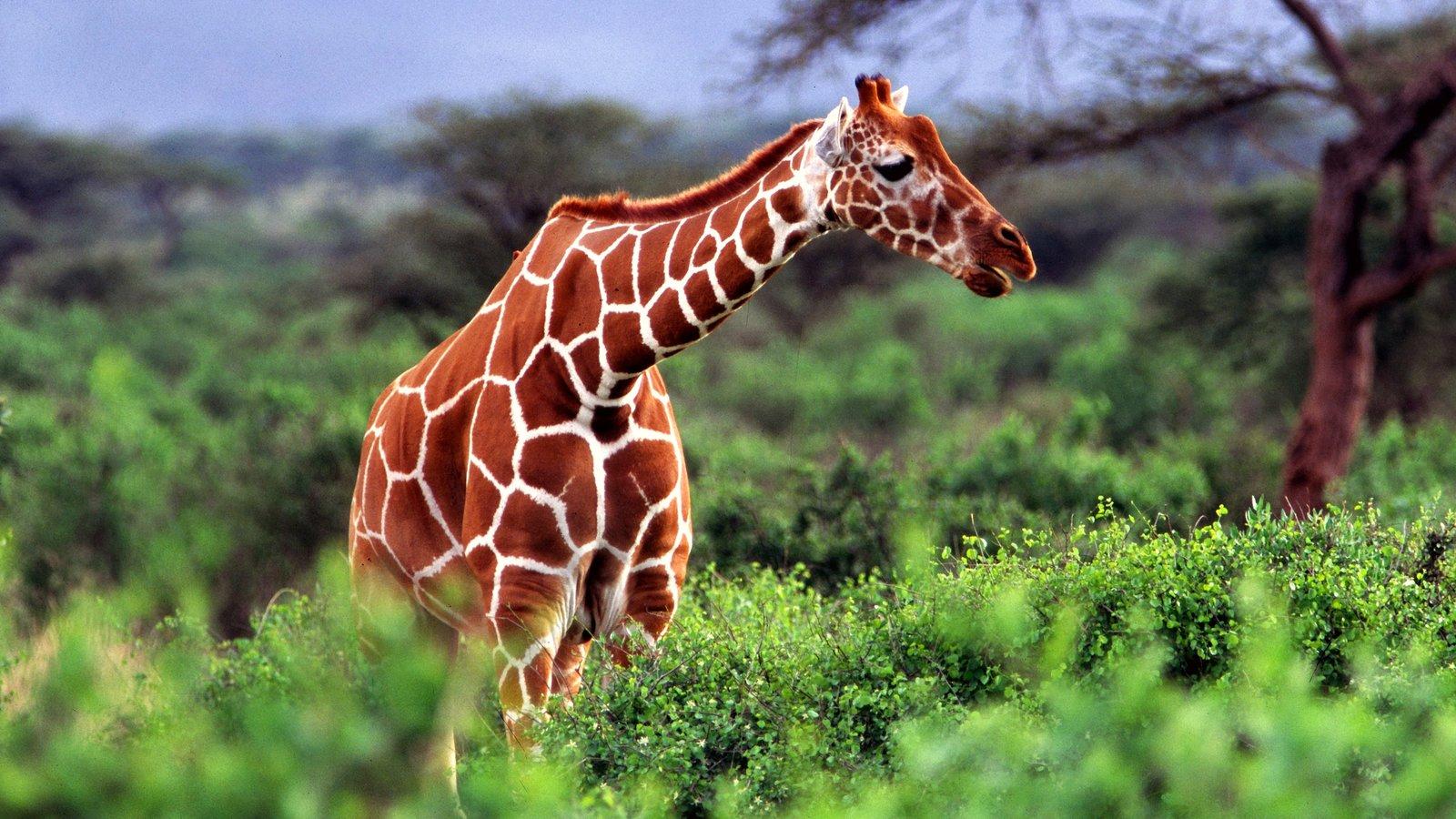 Nairobi featuring land animals