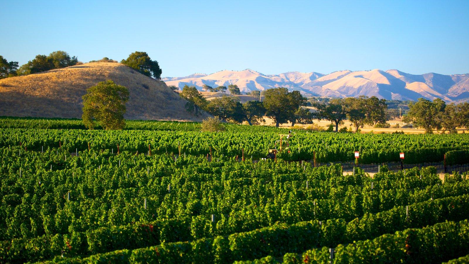 Santa Barbara mostrando paisagem e fazenda