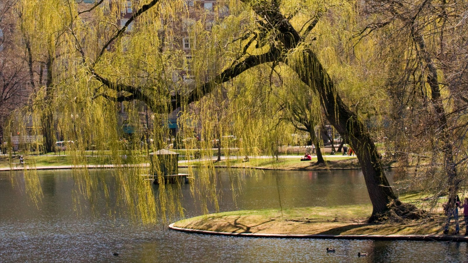 Boston Public Garden Pictures: View Photos & Images of Boston Public ...