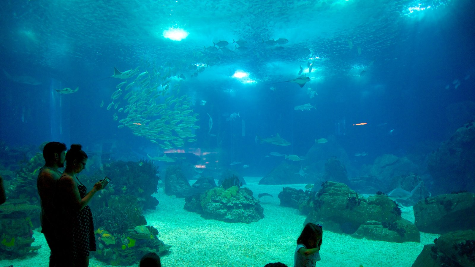 Lisbon Oceanarium which includes marine life and interior views as well as a couple