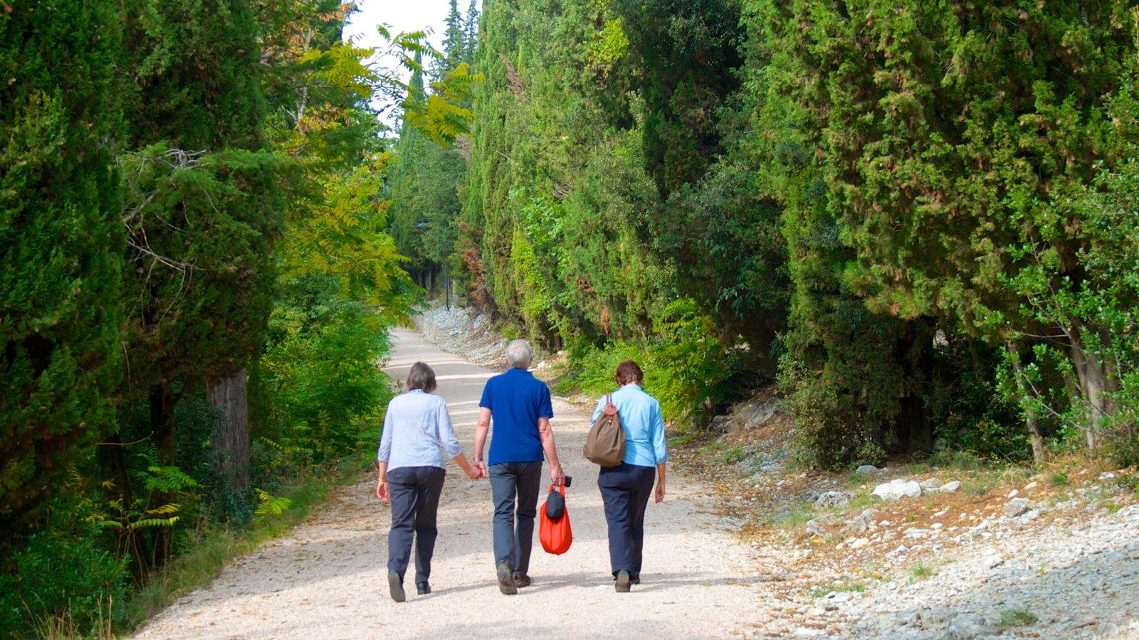 Gubbio ofreciendo escenas forestales y senderismo o caminata y también un pequeño grupo de personas