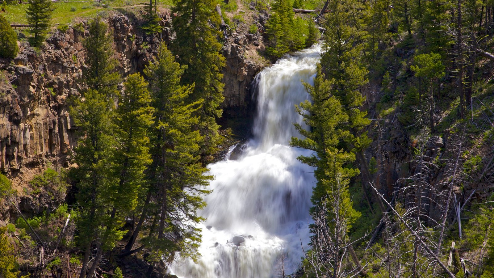 Yellowstone National Park caracterizando uma cascata e cenas de floresta