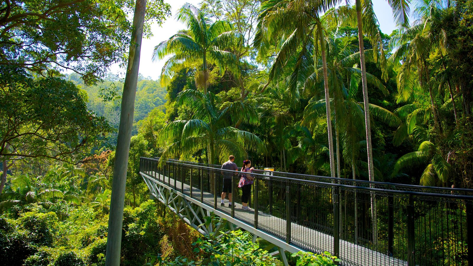 Mount Tamborine which includes tropical scenes, forest scenes and hiking or walking