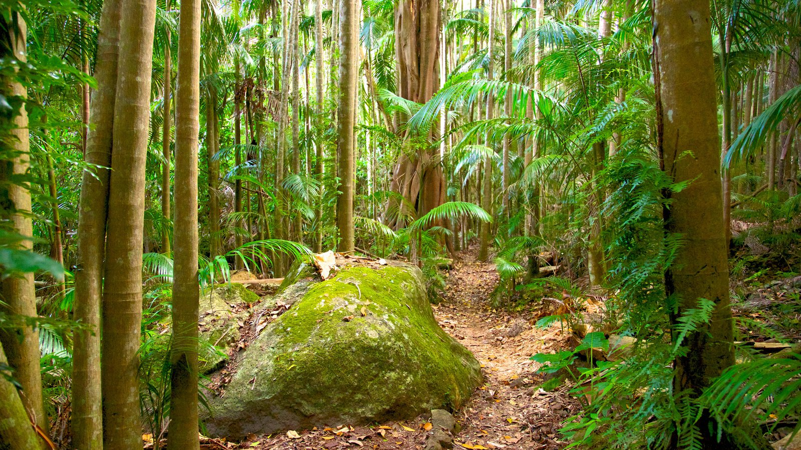Tamborine National Park Palm Grove Section which includes forest scenes