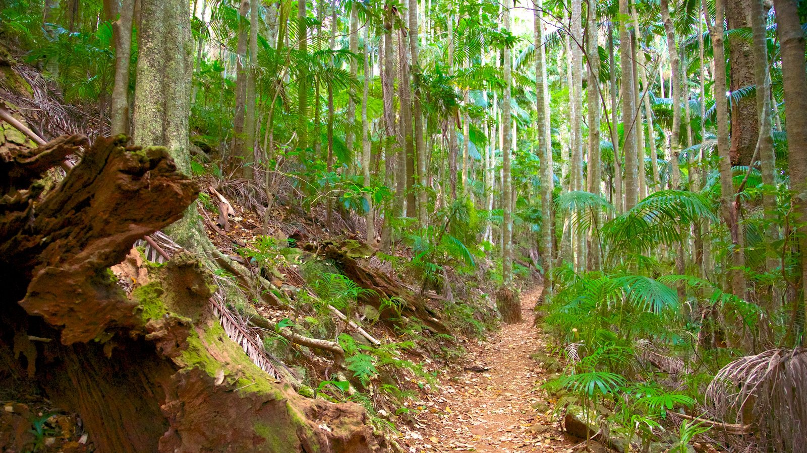 Tamborine National Park Palm Grove Section which includes forests