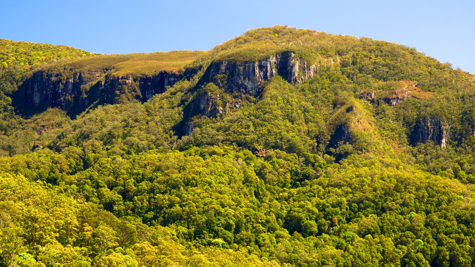 Springbrook National Park which includes landscape views and forests